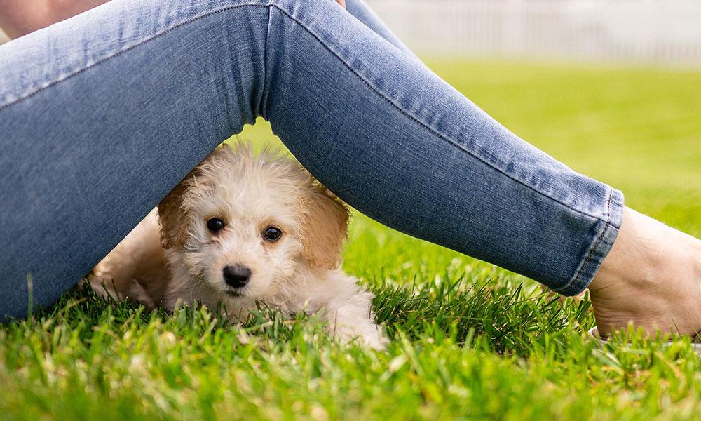 primera visita al veterinario, vacunas en perros