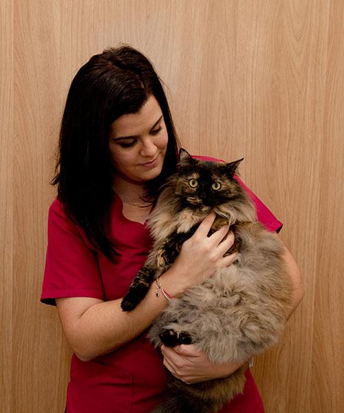 medicina interna, clínica veterinaria