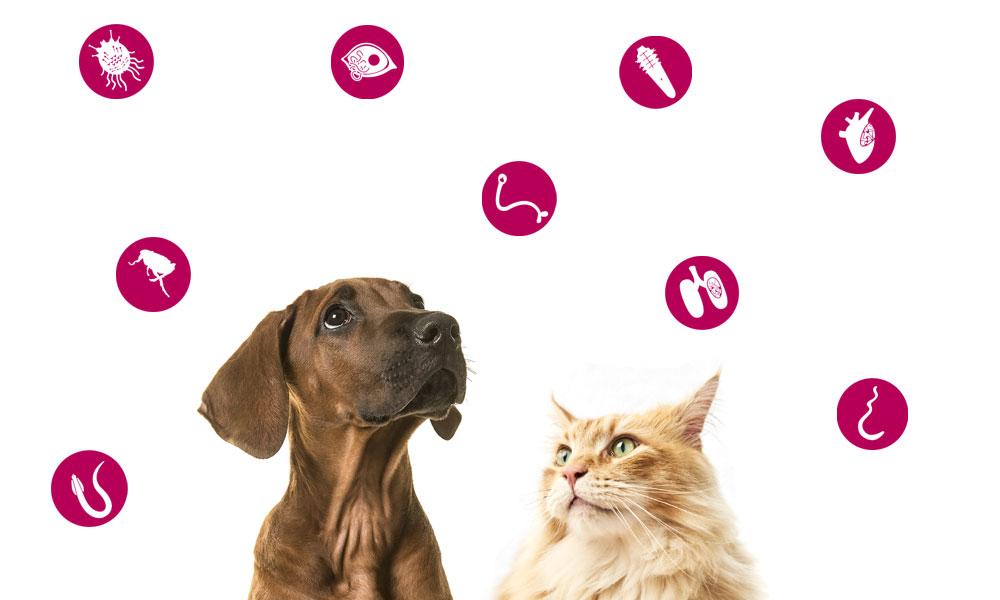 lombrices en perros, pulgas y garrapatas en perros