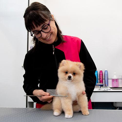peluquera canina y felina