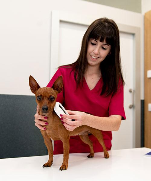 auxiliar clínica veterinaria
