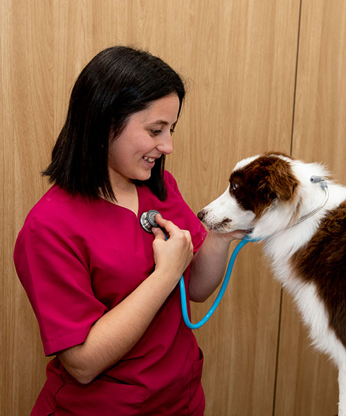 especialidades veterinarias, cardiología veterinaria