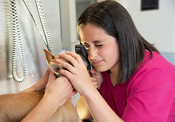 oftalmología veterinaria